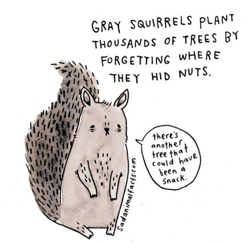 sadanimalfacts scoiattolo